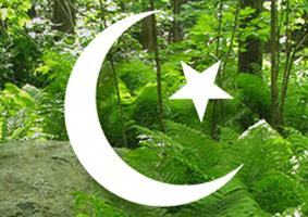 Area P Islam